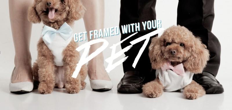 跟寵物拍婚紗照要注意的十個事項